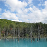 Blue Pond (Biei)